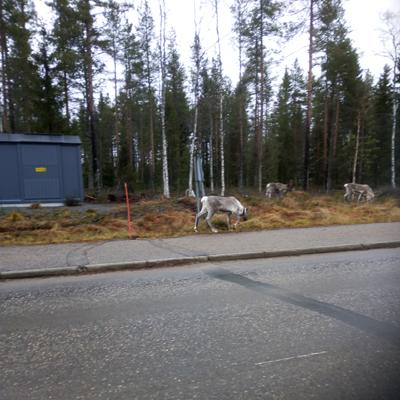 Hostellijärjestön järjestöreissaaja Jari Kuusamosssa ja Oivangin hostellissa.