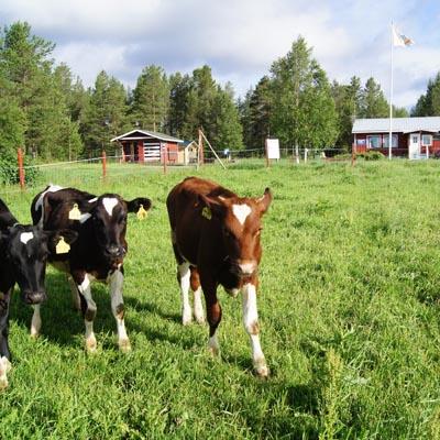 Visatupa, Sodankylä/Raudanjoki
