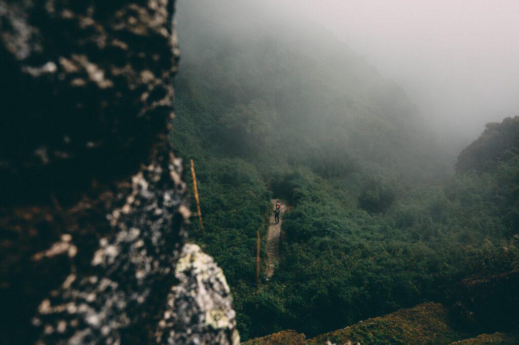 Amazon Kuva: Kal Visuals / Unsplash