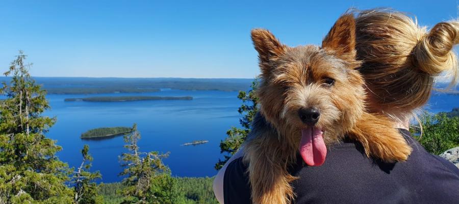 Hostellijärjestön hostellireissaaja Hanna ja Folke-koira Ukko-Kolin huipulla